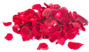 Stockfresh_3849413_pile-of-rose-petals_sizeXS_fd9c80